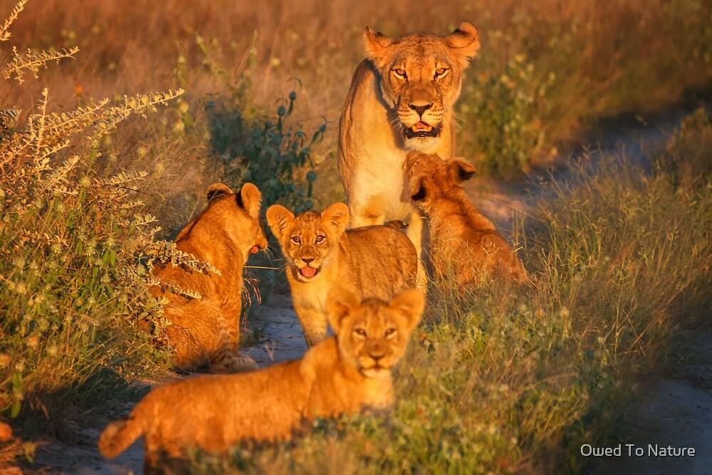 Kalahari Cub greeting by Owed To Nature