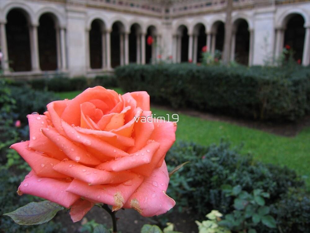 Rose. Cloisters of Basilica di San Paolo Fuori le Mura, Rome, Italy by vadim19
