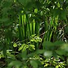 The Lush Green of Spring by Emsky