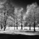 WP SNOW by dvande1