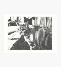 Feline Notes Art Print
