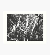 Arboreal Notes Art Print