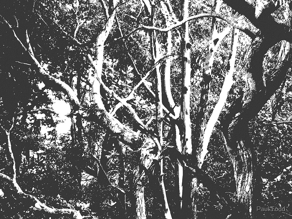 Arboreal Notes by Paul Todd