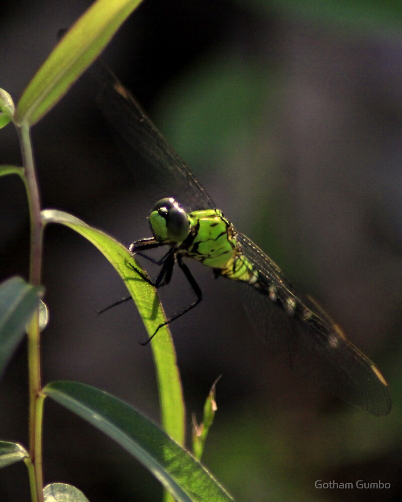 Green Dragonfly by Dreebs