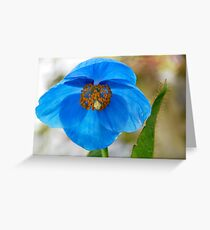 himalayan blue Greeting Card
