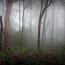 foggy forest by Joel McDonald