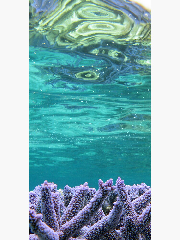 Coral Reeflections I by neoniphon