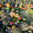 Breenhold Autumn Aerial 2 by Geoff Smith