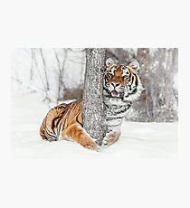 Tree Hugger Siberian Style Photographic Print