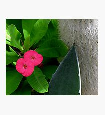 a flower among us Photographic Print