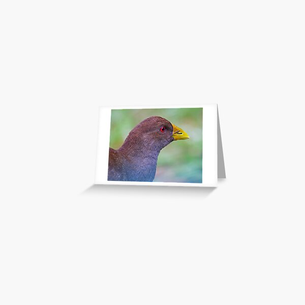 NATIVE-HEN ~ Piyura K37U8HEM by David Irwin ~ WO Greeting Card
