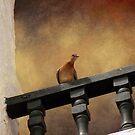 Tunisian Bird. by mariarty