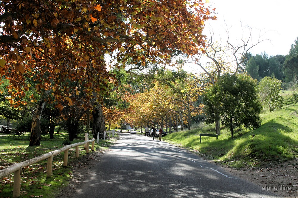 Brownhill Creek Recreation Park,Adelaide Hills, S.A. by elphonline