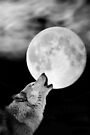 El Lobo Lunar by missmoneypenny