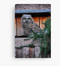 Baby Owl Canvas Print