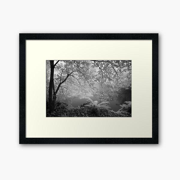 Duck Pond in Mist Framed Art Print