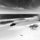 der Surfer von Ingrid Beddoes