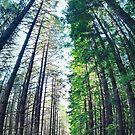 Treeburst by James McKenzie