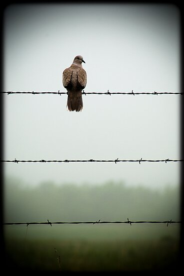 Do you mind? I am trying to sit on this barbed wire fence and contemplate the meaning of life and you're disturbing me... by Jenny Miller