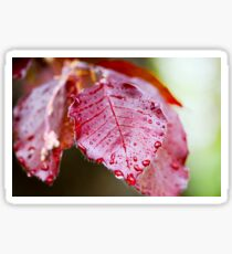 Red Leaf With Water Droplets Sticker