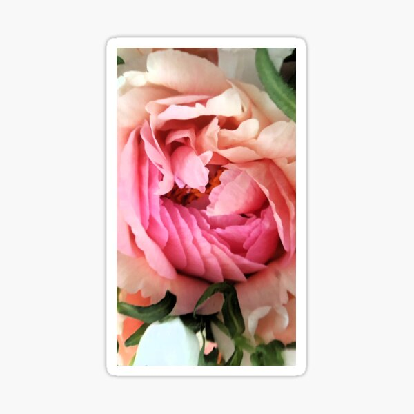 Pivoine Sticker