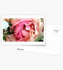 Pivoine Cartes postales