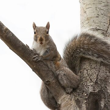 Grey squirrel in tree by darby8