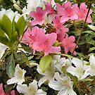 Rhododendrons by Shoshonan