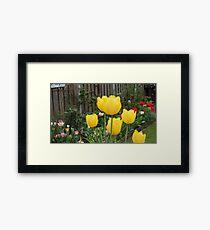 Garden Tulips Framed Print