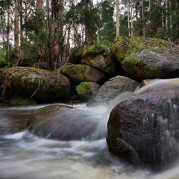 Milk of the Forest - Toorongo River by PixelMuser
