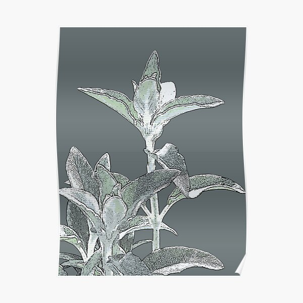 Muted Green Lambs Tongue Plant Digital Art Photography Poster