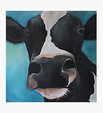 Sugar the Cow Photographic Print