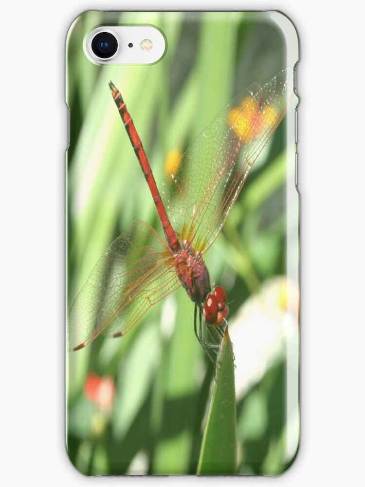 Red Skimmer or Firecracker Dragonfly by taiche
