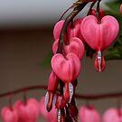 Bleeding Heart by KatsEye