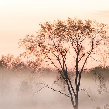 Fog At Dawn (Orange) by colorstorm