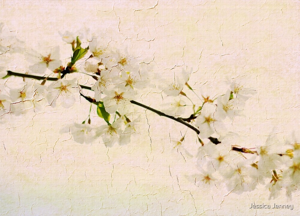 Pear Blossom by Jessica Jenney