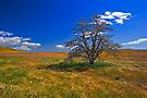 Tree Alone on a Hill by photosbyflood