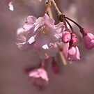 Pink by James Wheeler