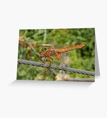 Female Red Skimmer Dragonfly  Greeting Card