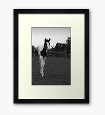 Filly# Framed Print