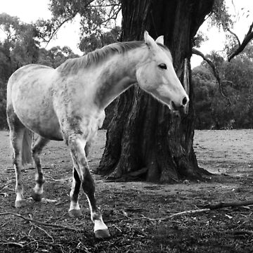 White Horse by rozmcq