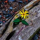Wild Flowers Along The Mississippi 3 by Gypsykiss