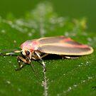 Painted Lichen Moth IMG_3271 by DigitallyStill