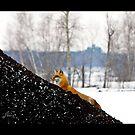 Fox Trot 1 by DigitallyStill
