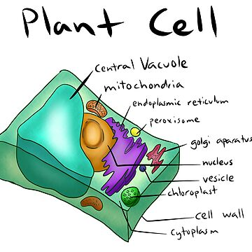 Plant Cell by PurpleBallSTU