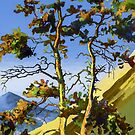 Pine Trees in the Mountains by Oleg Atbashian