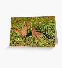 Female Cardinal and Late Brood Male Greeting Card