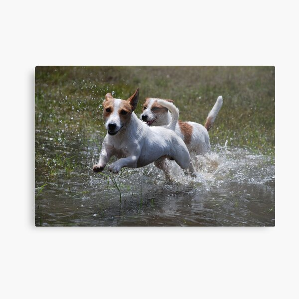 """""""Catch Me if You Can"""" Metal Print"""
