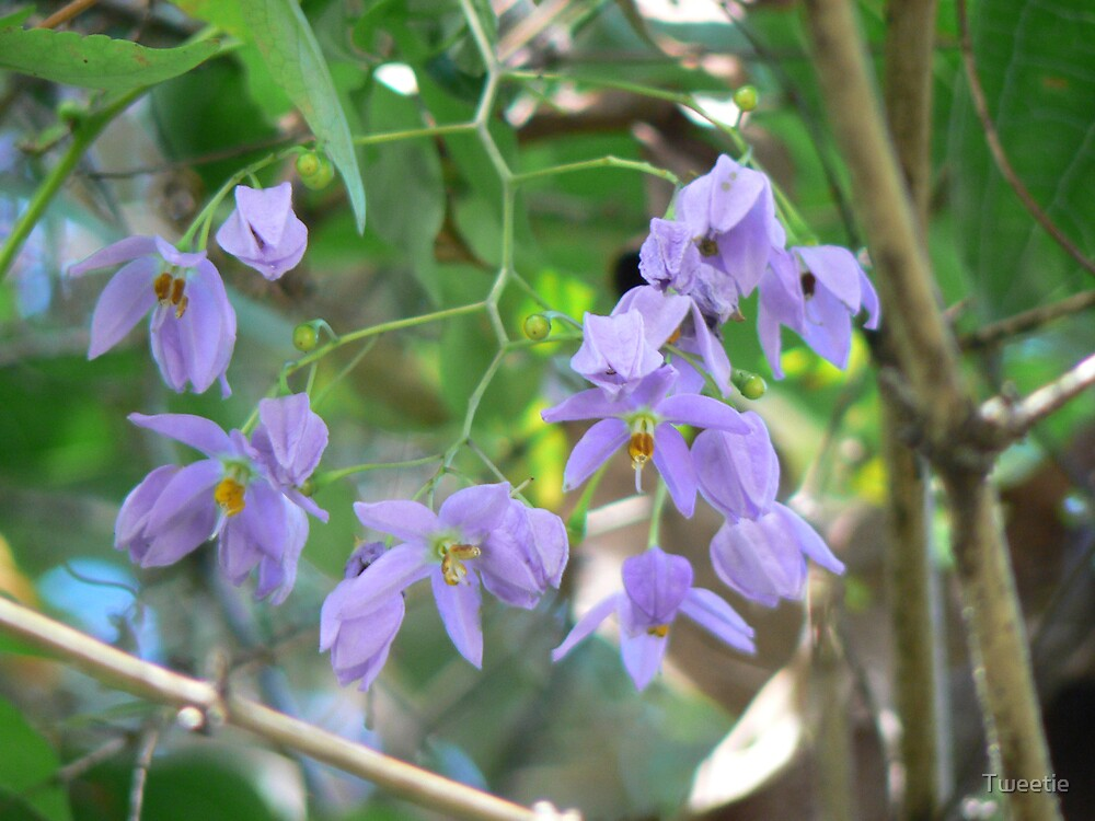 Purple Flowers by Tweetie