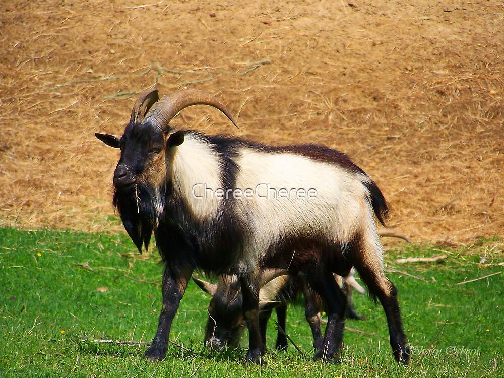 Billy Goat by ChereeCheree